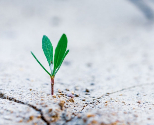Seedling coming out of earth